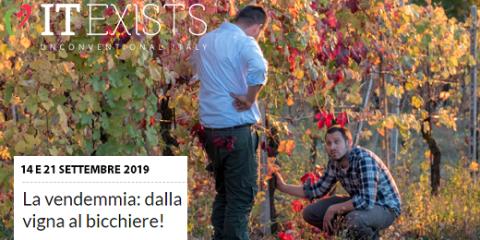 La vendemmia dalla vigna al bicchiere (14 e 21/09/2019)